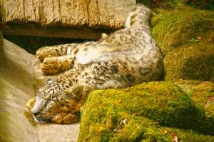 Himalayan-zoological-park-300x199