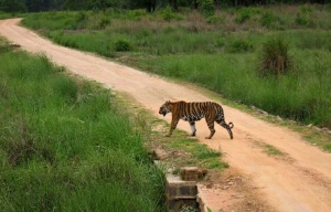 achanakmar-wildlife-sanctuary